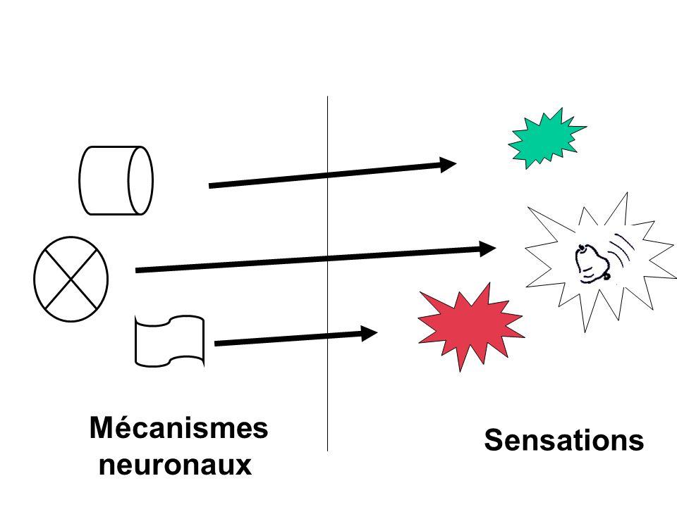 Mécanismes neuronaux Sensations