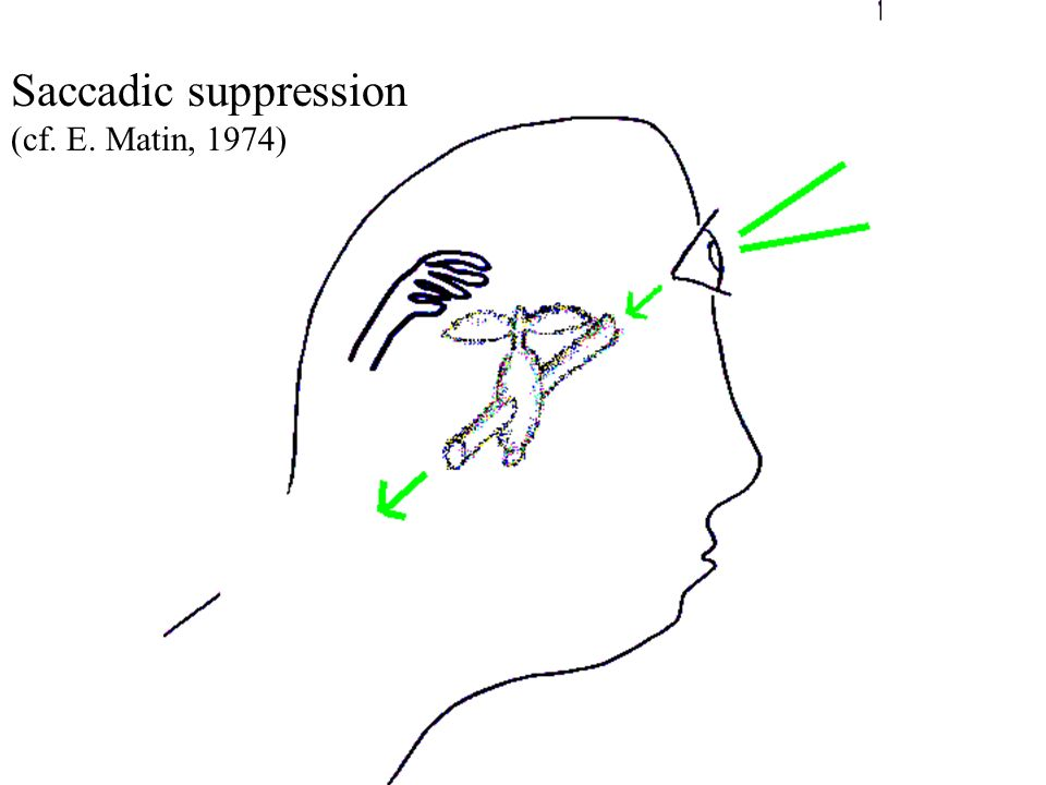 Saccadic suppression (cf. E. Matin, 1974)