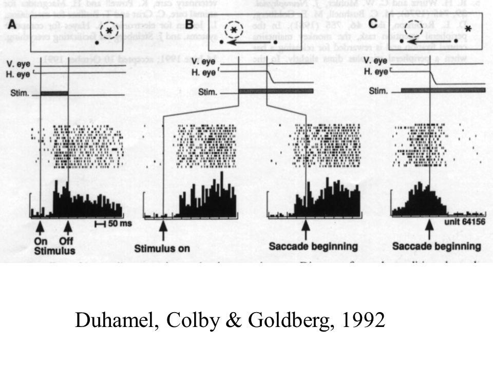 Duhamel, Colby & Goldberg, 1992