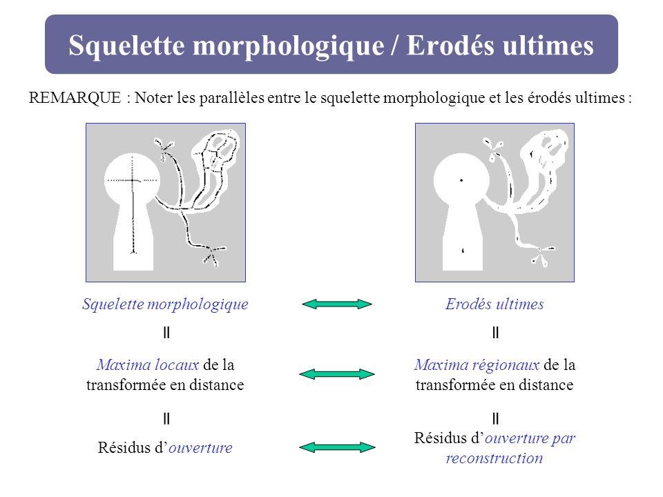 Squelette morphologique / Erodés ultimes Squelette morphologiqueErodés ultimes Maxima locaux de la transformée en distance Maxima régionaux de la tran