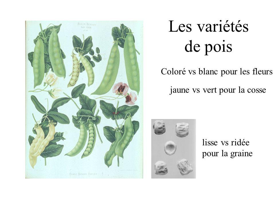 Les variétés de pois jaune vs vert pour la cosse Coloré vs blanc pour les fleurs lisse vs ridée pour la graine