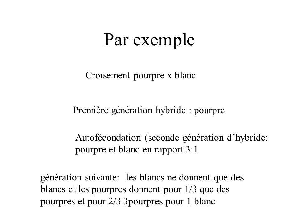 Par exemple Croisement pourpre x blanc Première génération hybride : pourpre Autofécondation (seconde génération dhybride: pourpre et blanc en rapport
