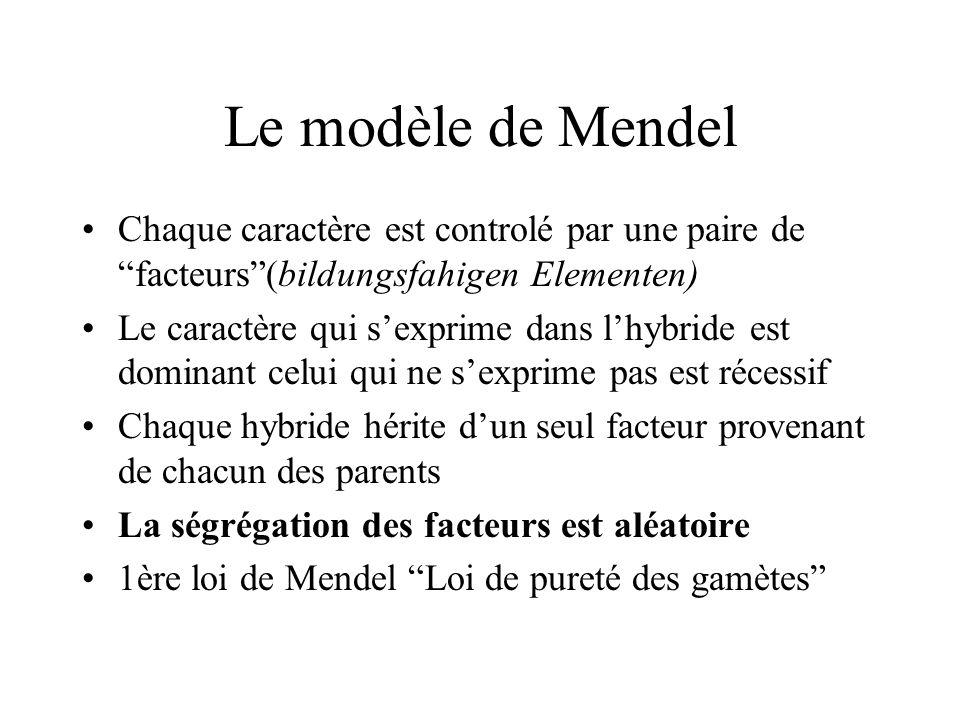 Le modèle de Mendel Chaque caractère est controlé par une paire de facteurs(bildungsfahigen Elementen) Le caractère qui sexprime dans lhybride est dom