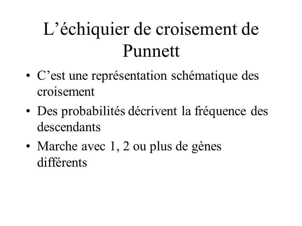 Léchiquier de croisement de Punnett Cest une représentation schématique des croisement Des probabilités décrivent la fréquence des descendants Marche