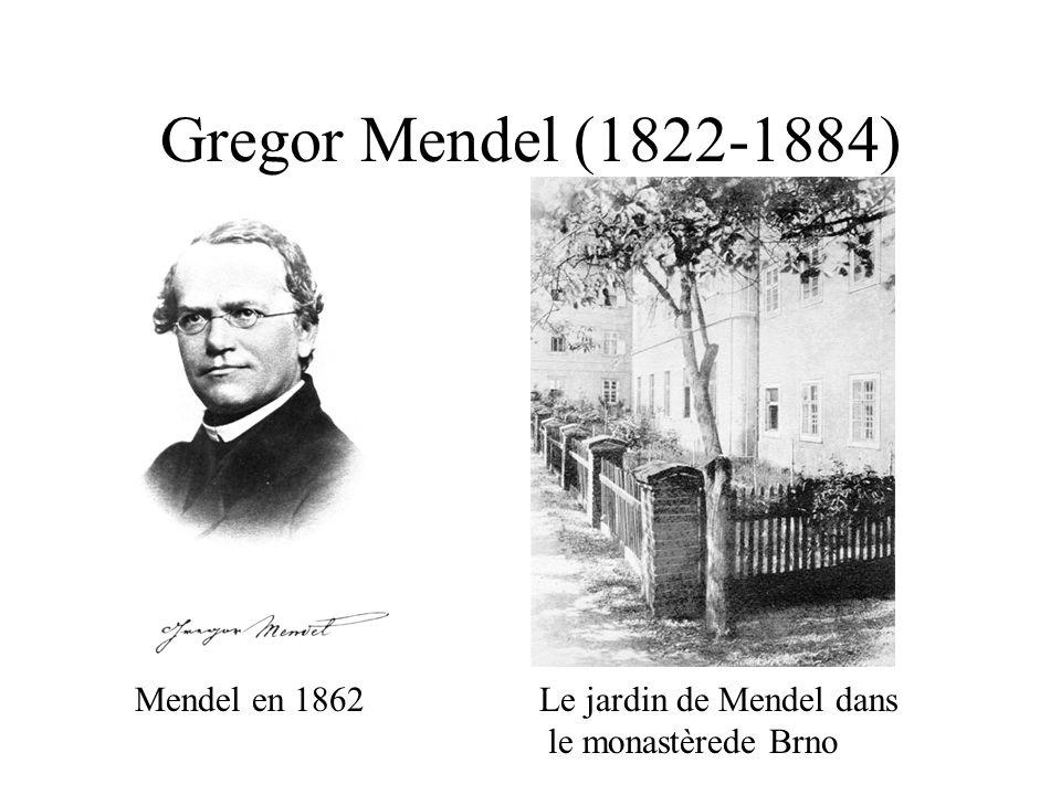 Gregor Mendel (1822-1884) Le jardin de Mendel dans le monastèrede Brno Mendel en 1862