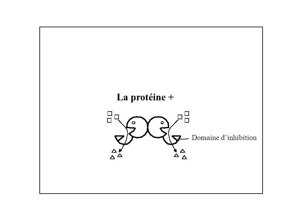 La protéine + Domaine dinhibition