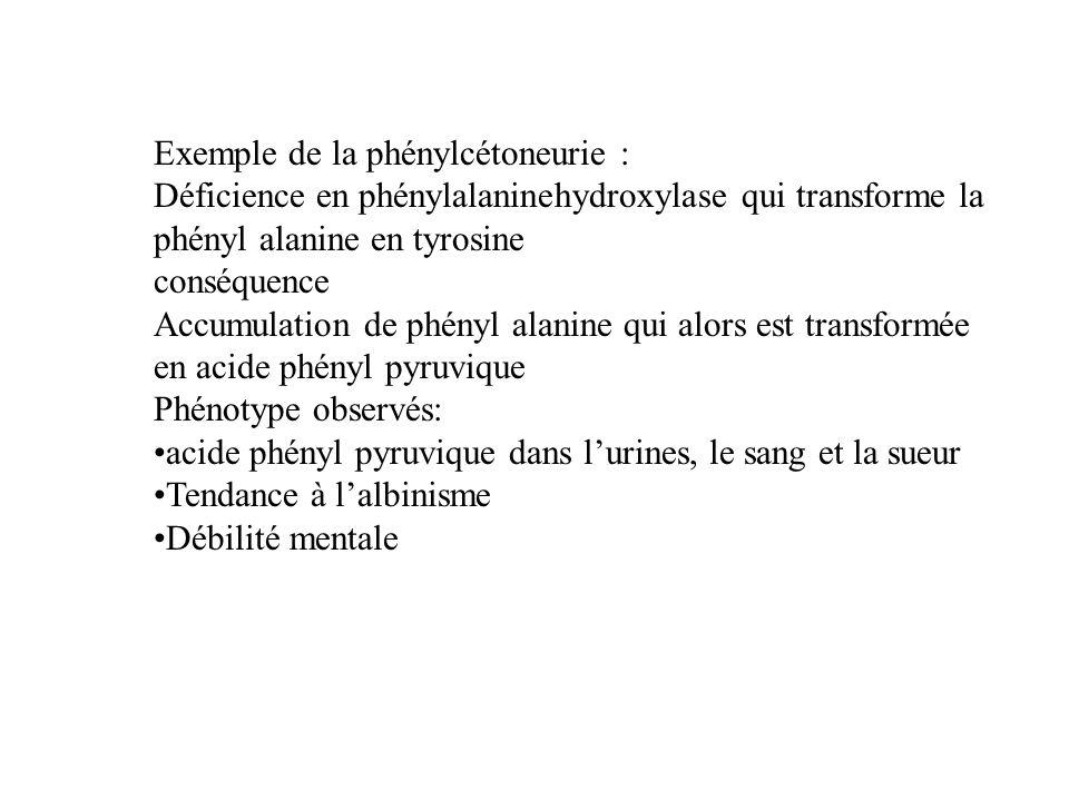 Exemple de la phénylcétoneurie : Déficience en phénylalaninehydroxylase qui transforme la phényl alanine en tyrosine conséquence Accumulation de phény