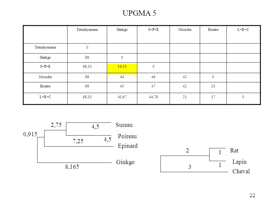 22 UPGMA 5 TetrahymenaGinkgoS+P+EMoucheBoniteL+R+C Tetrahymena0 Ginkgo680 S+P+E69,3316,330 Mouche694446420 Bonite6845474223 L+R+C68,3340,6744,7821170