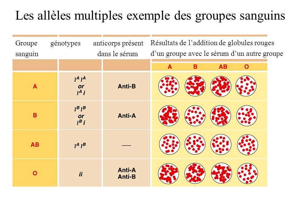 Les allèles multiples exemple des groupes sanguins Résultats de laddition de globules rouges dun groupe avec le sérum dun autre groupe Groupe génotype
