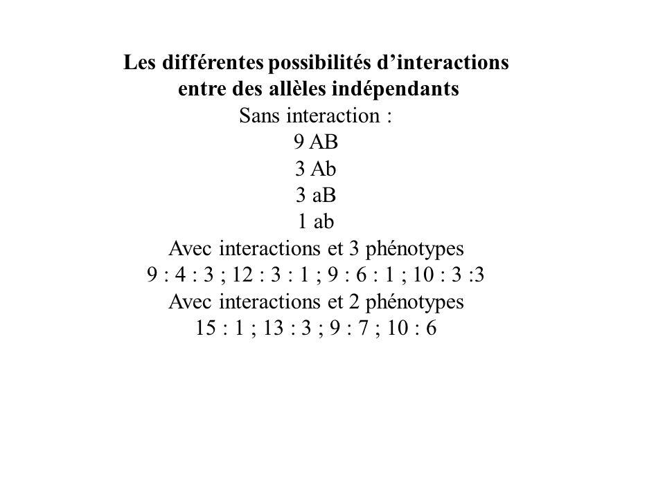 Les différentes possibilités dinteractions entre des allèles indépendants Sans interaction : 9 AB 3 Ab 3 aB 1 ab Avec interactions et 3 phénotypes 9 :