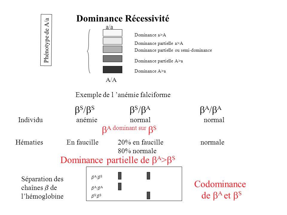 Dominance Récessivité A/A a/a Phénotype de A/a Dominance partielle ou semi-dominance Dominance partielle a>A Dominance partielle A>a Dominance a>A Dom