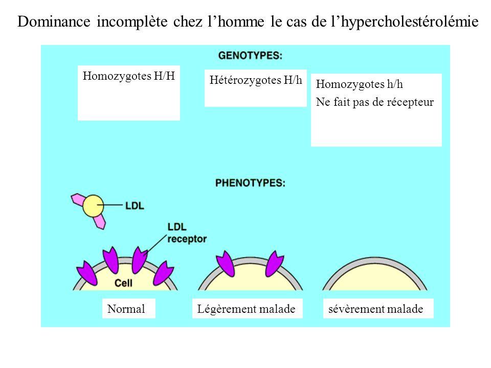 Dominance incomplète chez lhomme le cas de lhypercholestérolémie Hétérozygotes H/h Homozygotes H/H Homozygotes h/h Ne fait pas de récepteur NormalLégè