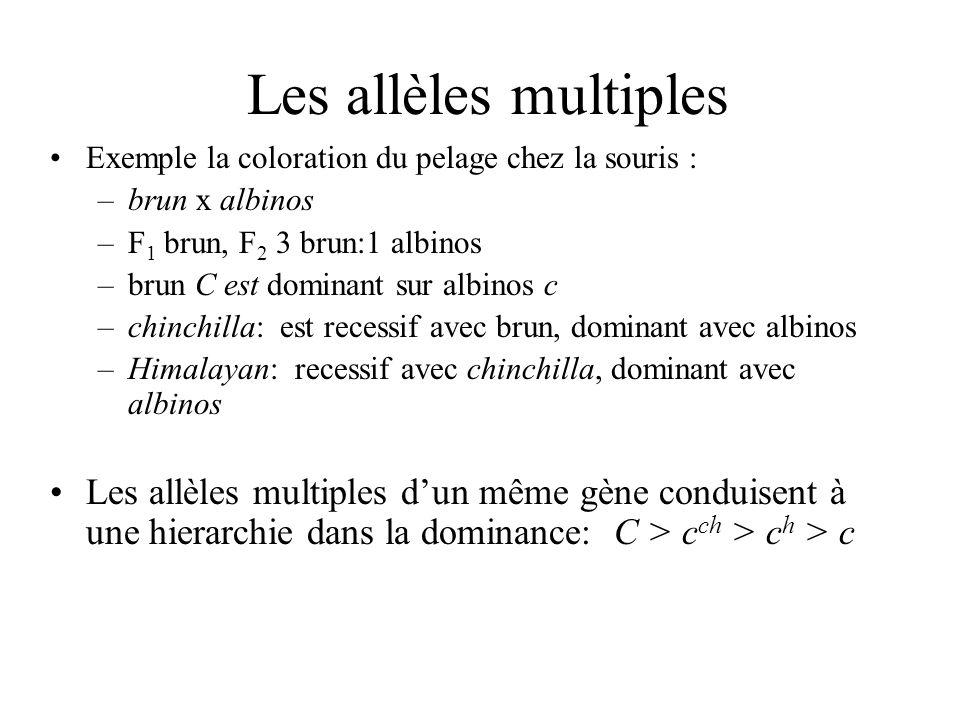 Les allèles multiples Exemple la coloration du pelage chez la souris : –brun x albinos –F 1 brun, F 2 3 brun:1 albinos –brun C est dominant sur albino