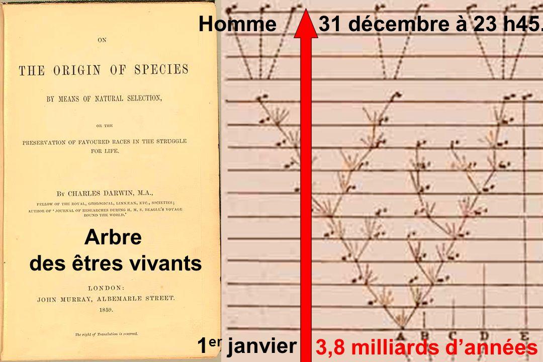 Modèle darwinien: Evolution à partir dune espèce ancêtre commun variable Adaptations différentes par la sélection naturelle, avec le temps géologique.