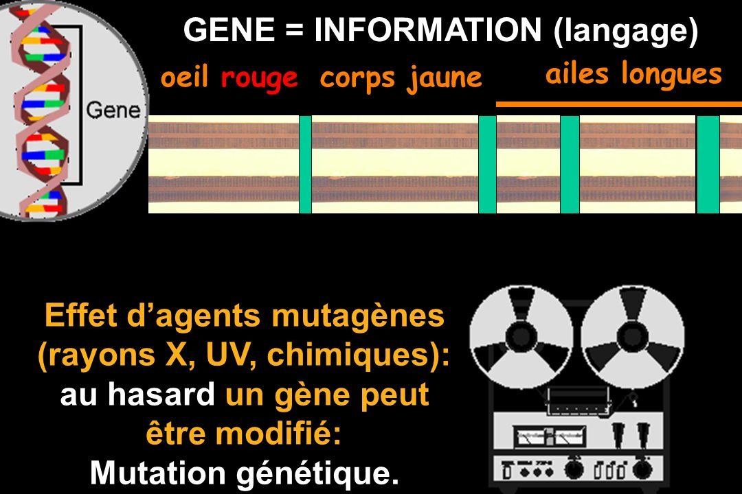 Darwin + La génétique : LA THEORIE SYNTHÉTIQUE de lEVOLUTION les chromosomes lADN