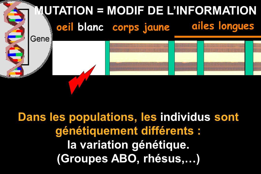 GENE = INFORMATION (langage) oeil rougecorps jaune Effet dagents mutagènes (rayons X, UV, chimiques): au hasard un gène peut être modifié: Mutation gé