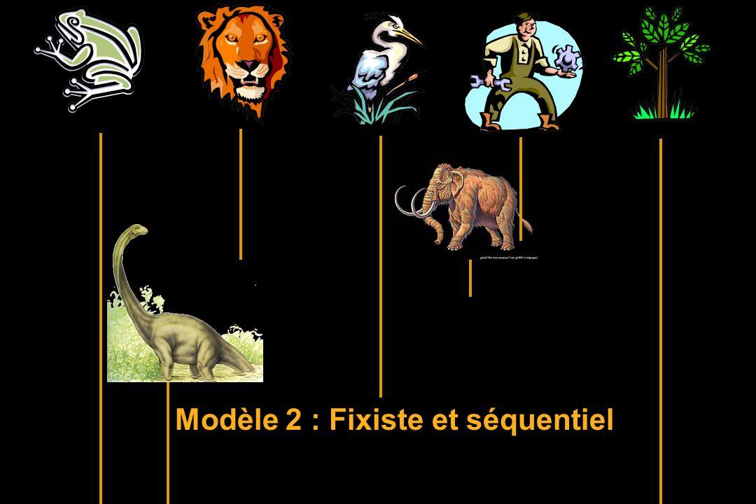 Modèle 2 : Fixiste et séquentiel