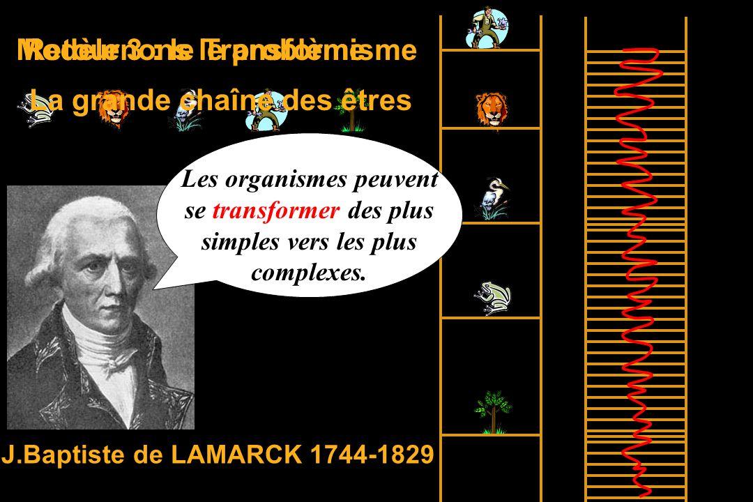 Retournons le problème La grande chaîne des êtres Modèle 3 : le Transformisme J.Baptiste de LAMARCK 1744-1829 Les organismes peuvent se transformer des plus simples vers les plus complexes.