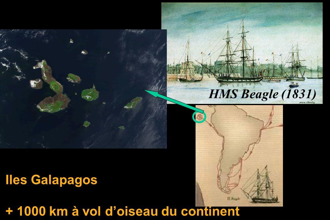 Iles Galapagos + 1000 km à vol doiseau du continent HMS Beagle (1831)