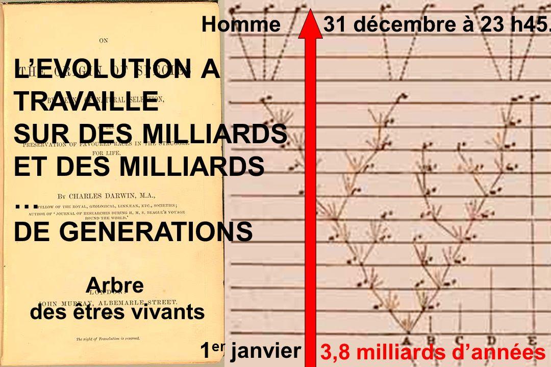 3,8 milliards dannées Arbre des êtres vivants 1 er janvier Homme 31 décembre à 23 h45.