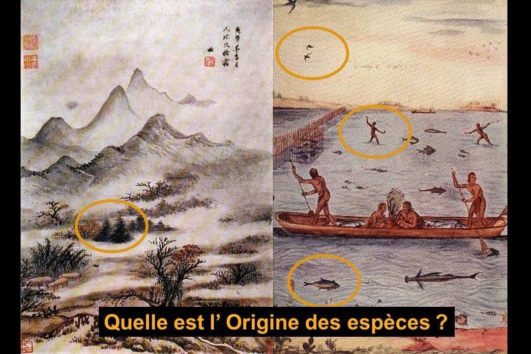 Quelle est l Origine des espèces ?