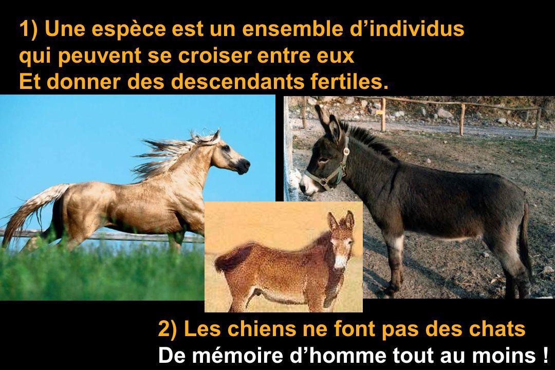 1) Une espèce est un ensemble dindividus qui peuvent se croiser entre eux Et donner des descendants fertiles.