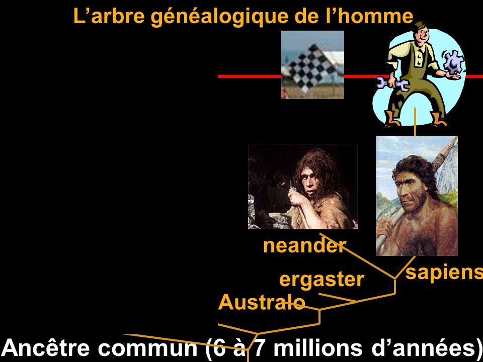 Il a 50 000 à 200 000 ans 1 million 2 millions 6 millions La grande famille de lhomme