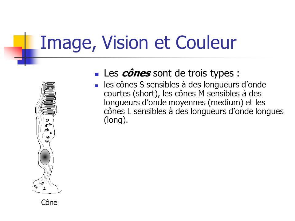 Image, Vision et Couleur Les cônes sont de trois types : les cônes S sensibles à des longueurs donde courtes (short), les cônes M sensibles à des long