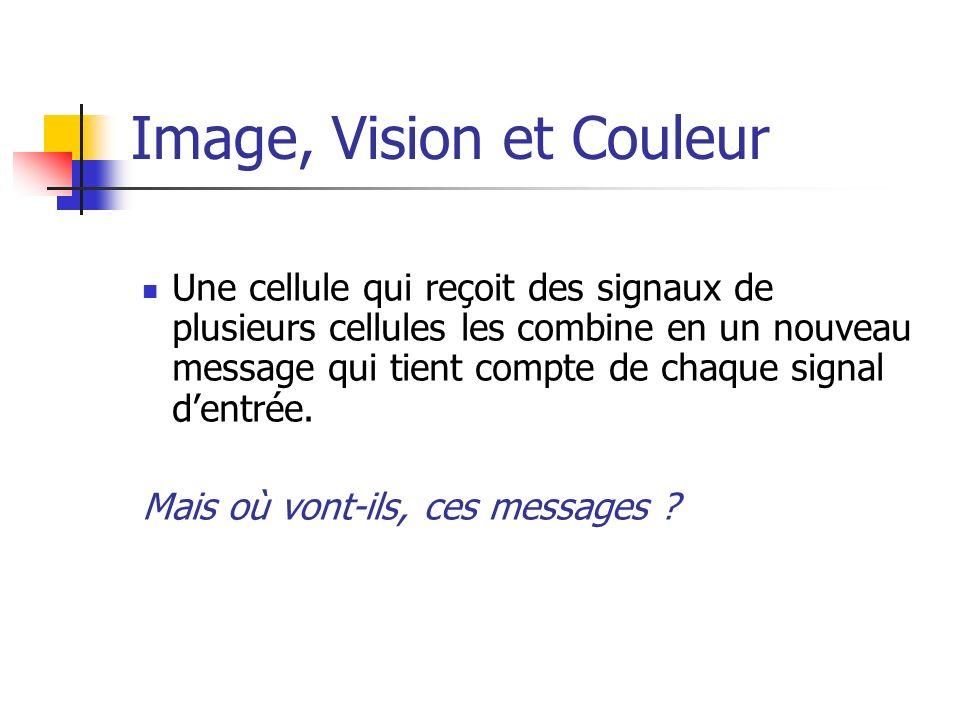 Image, Vision et Couleur Une cellule qui reçoit des signaux de plusieurs cellules les combine en un nouveau message qui tient compte de chaque signal