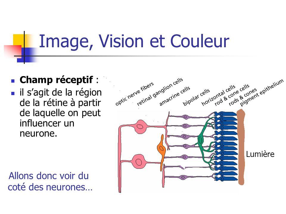 Image, Vision et Couleur Champ réceptif : il sagit de la région de la rétine à partir de laquelle on peut influencer un neurone. Lumière Allons donc v