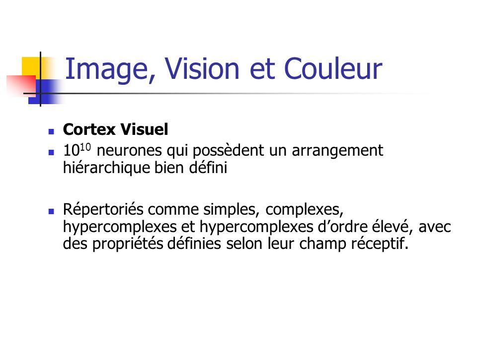 Image, Vision et Couleur Cortex Visuel 10 10 neurones qui possèdent un arrangement hiérarchique bien défini Répertoriés comme simples, complexes, hype