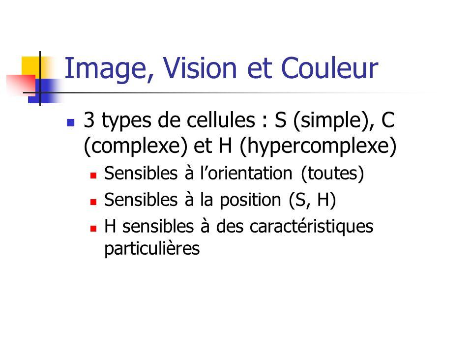 3 types de cellules : S (simple), C (complexe) et H (hypercomplexe) Sensibles à lorientation (toutes) Sensibles à la position (S, H) H sensibles à des