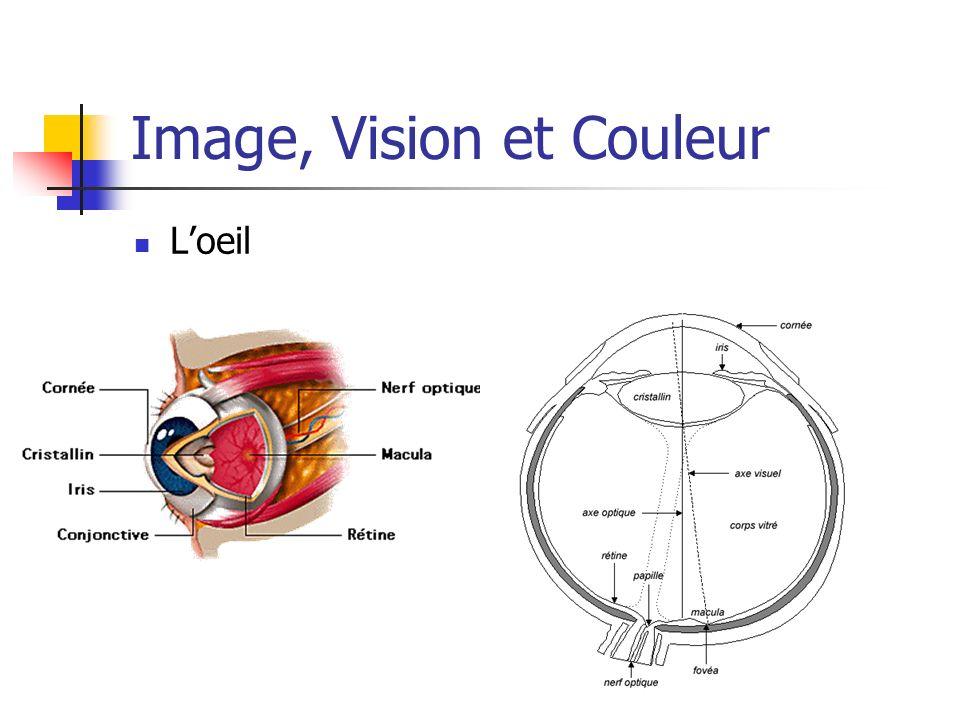Les modèles de représentation de la couleur Modèle TSL : Teinte : C est la longueur d onde de la lumière réfléchie, ou transmise par un objet.