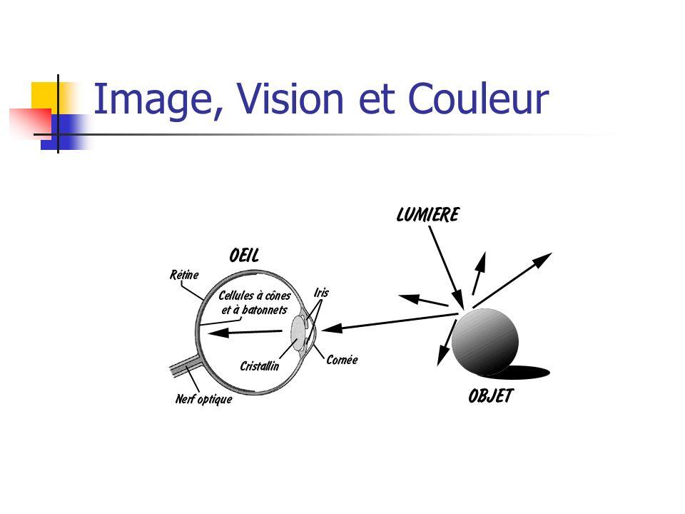 Lœil est sensible à la forme et à la couleur La rétine contient deux types de cellules photosensibles : les cônes et les bâtonnets.