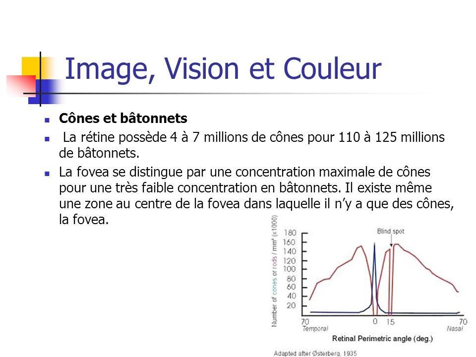 Image, Vision et Couleur Cônes et bâtonnets La rétine possède 4 à 7 millions de cônes pour 110 à 125 millions de bâtonnets. La fovea se distingue par
