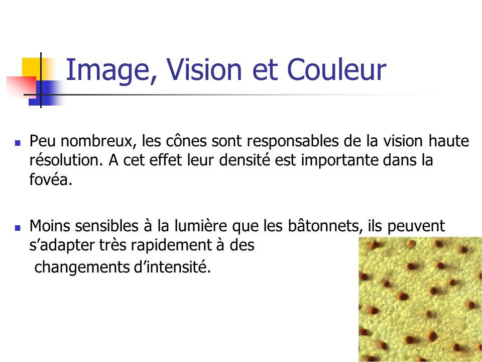 Image, Vision et Couleur Peu nombreux, les cônes sont responsables de la vision haute résolution. A cet effet leur densité est importante dans la fové
