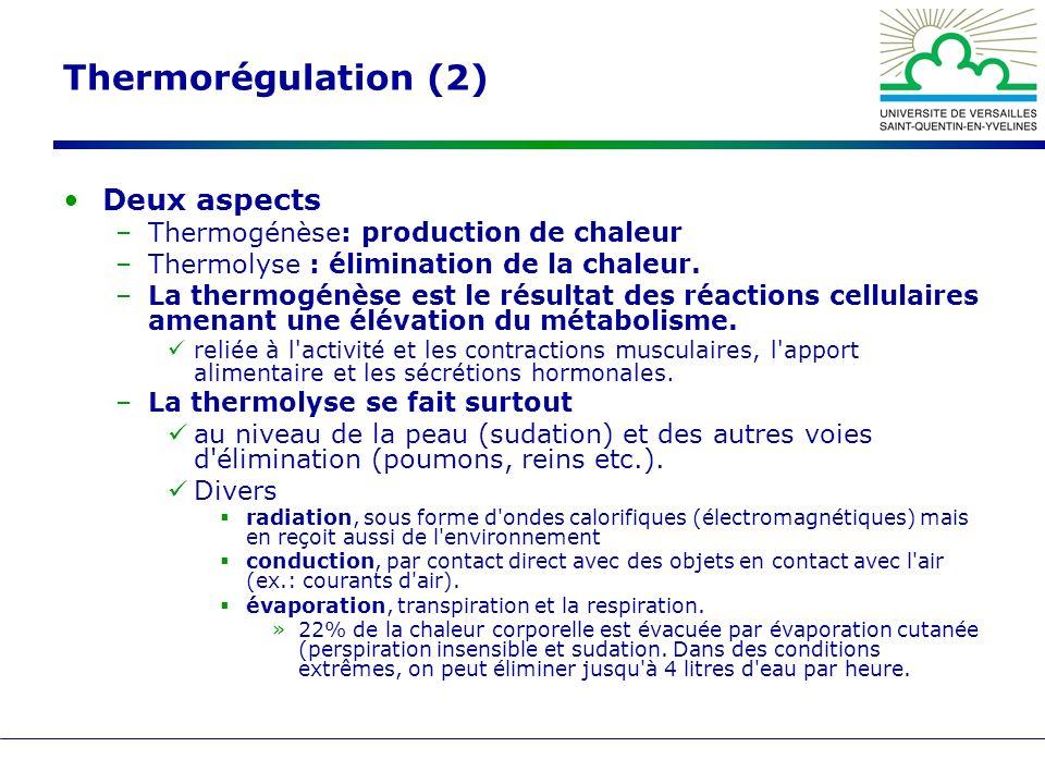 Thermorégulation (2) Deux aspects –Thermogénèse: production de chaleur –Thermolyse : élimination de la chaleur. –La thermogénèse est le résultat des r