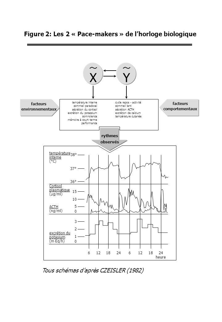 Figure 2: Les 2 « Pace-makers » de lhorloge biologique 24181262418126 heure 0 1 2 3 excrétion du potasium (m Eq/h) 0 5 10 15 Cortisol plasmatique (µg/