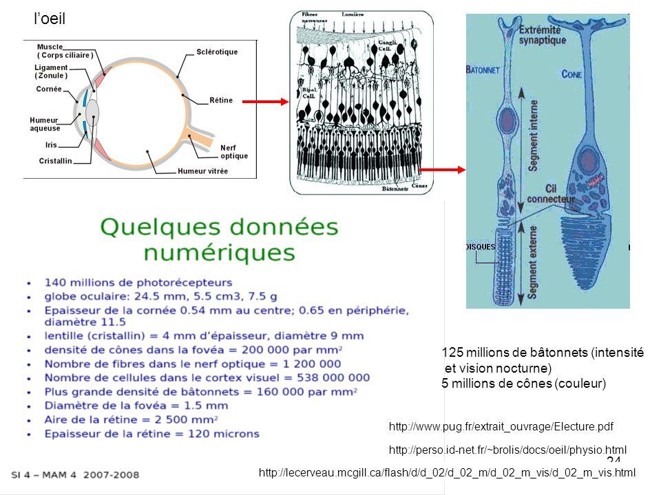 24 loeil http://perso.id-net.fr/~brolis/docs/oeil/physio.html 125 millions de bâtonnets (intensité et vision nocturne) 5 millions de cônes (couleur) h