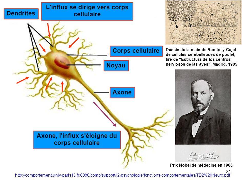 20 - modèle biologique - neurone artificiel - méthodes dapprentissage - limites de lapproche réseaux neuronaux