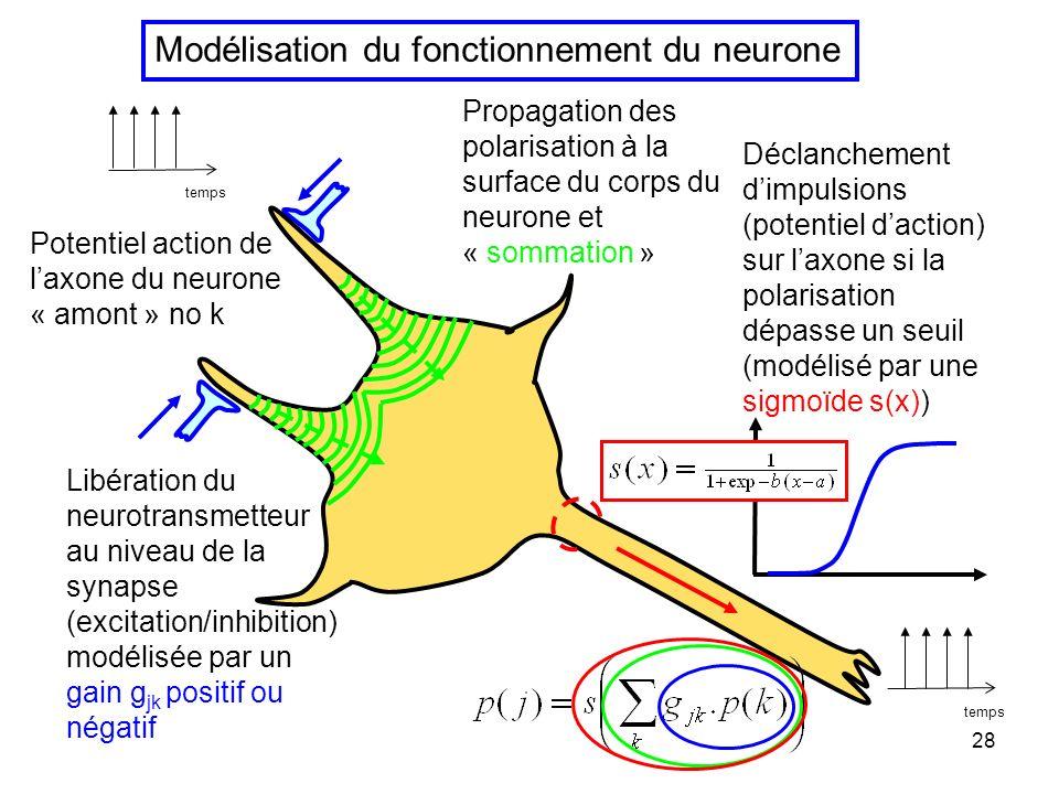 27 Chaque neurone reçoit des terminaisons excitatrices et des terminaisons inhibitrices Ex. neurone moteur Sil y a plus dexcitation que dinhibition le