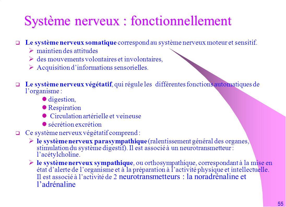 55 Système nerveux : fonctionnellement Le système nerveux somatique correspond au système nerveux moteur et sensitif. maintien des attitudes des mouve