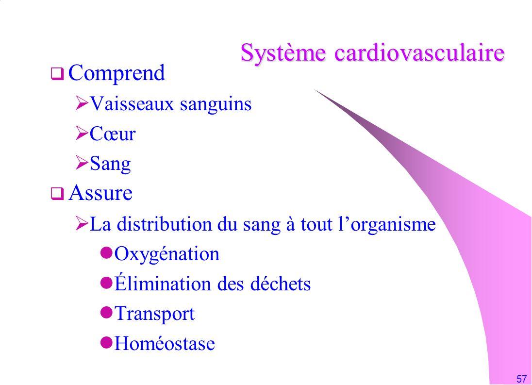 57 Système cardiovasculaire Comprend Vaisseaux sanguins Cœur Sang Assure La distribution du sang à tout lorganisme Oxygénation Élimination des déchets