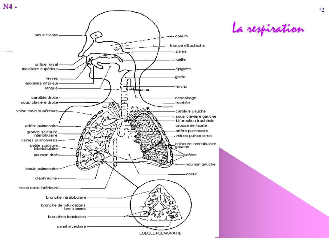 N4 - 72 La respiration