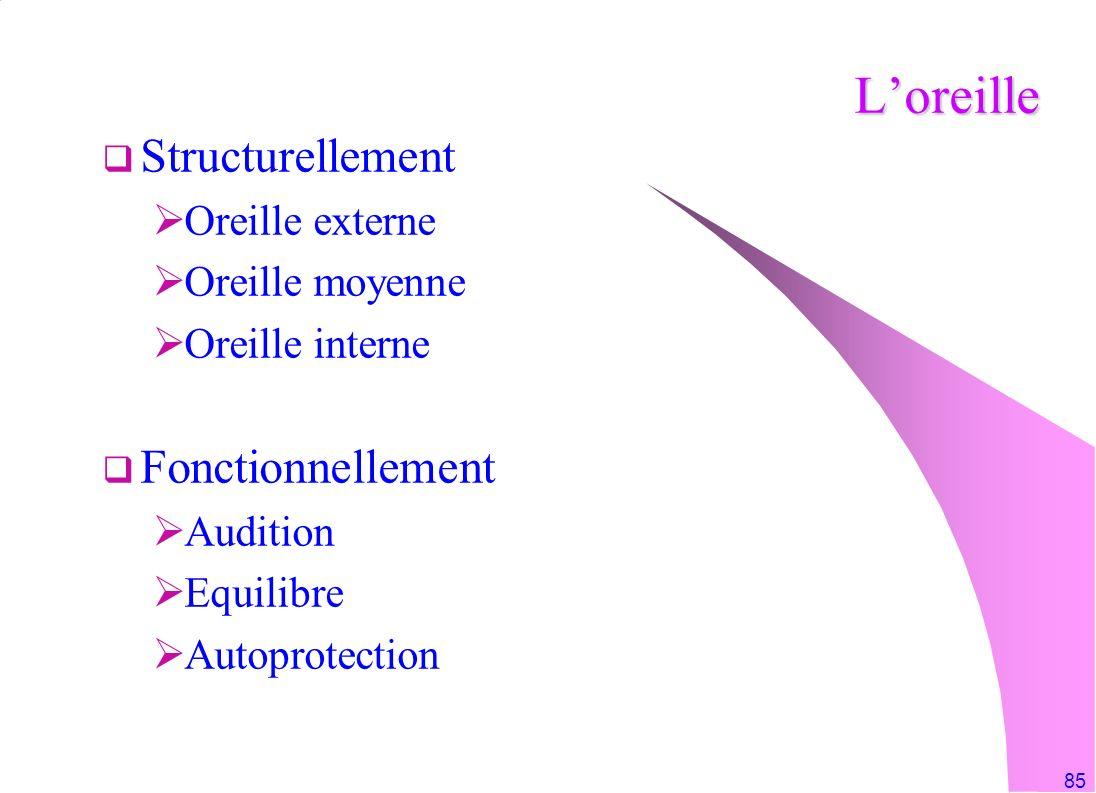 85 Loreille Structurellement Oreille externe Oreille moyenne Oreille interne Fonctionnellement Audition Equilibre Autoprotection
