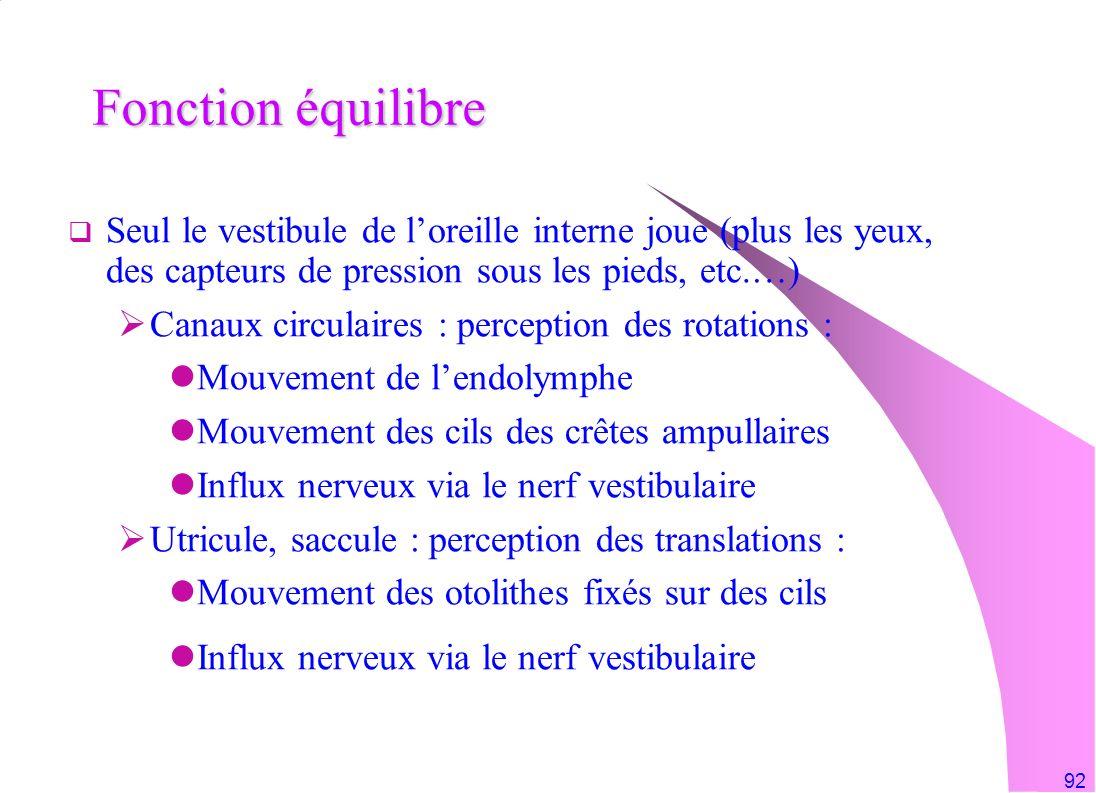 92 Fonction équilibre Seul le vestibule de loreille interne joue (plus les yeux, des capteurs de pression sous les pieds, etc.…) Canaux circulaires :
