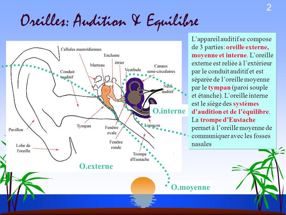 2 Oreilles: Audition & Equilibre O.externe O.moyenne O.interne Lappareil auditif se compose de 3 parties: oreille externe, moyenne et interne.