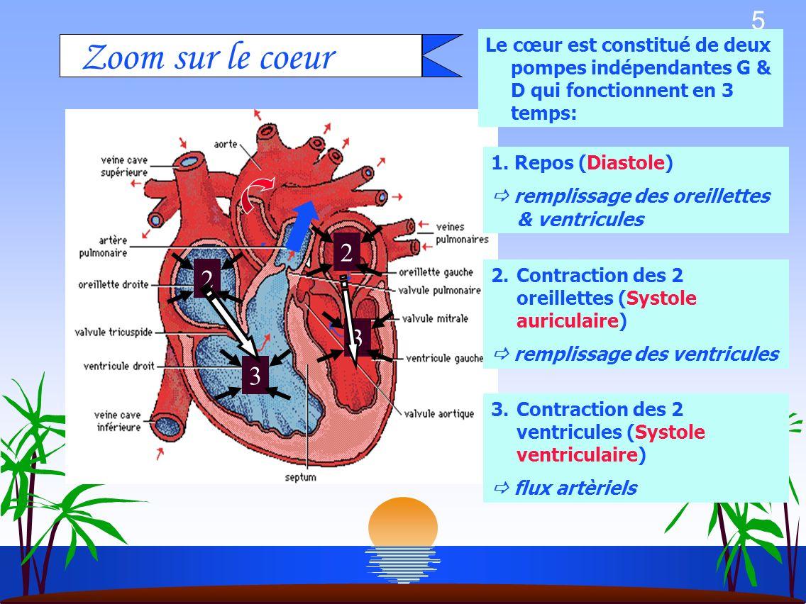 5 Le cœur est constitué de deux pompes indépendantes G & D qui fonctionnent en 3 temps: Zoom sur le coeur 2233 2.Contraction des 2 oreillettes (Systole auriculaire) remplissage des ventricules 3.Contraction des 2 ventricules (Systole ventriculaire) flux artèriels 1.