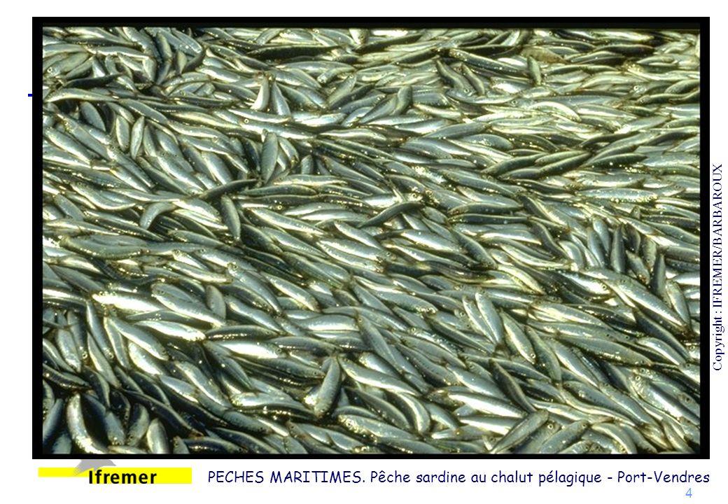 25 Gestion d une collection d organismes marins preleves lors des campagnes oceanographiques et tries au centre de tri biologique (CENTOB) Copyright : IFREMER/PLAILLY/EURELIOS