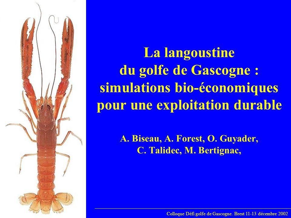 Langoustine: simulations bio-économiques La pêcherie langoustinière du golfe de Gascogne 2001 en chiffres: Colloque Défi golfe de Gascogne.